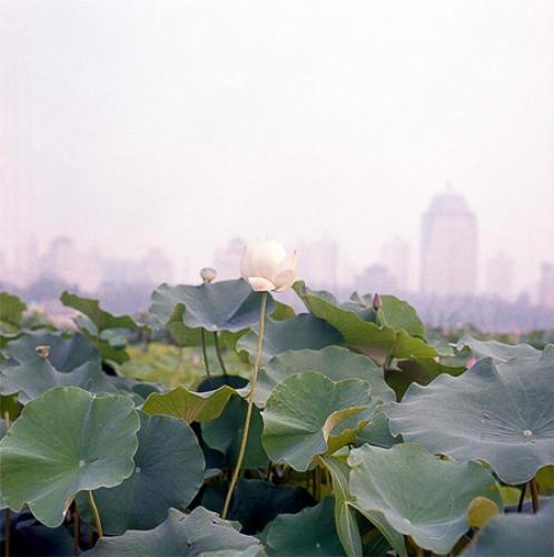 http://www.charleskasprzak.com/files/gimgs/th-17_c_kasprzak_china (9).jpg